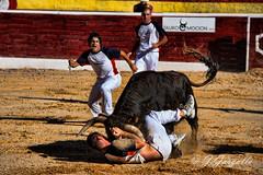 Angustia (J.Gargallo) Tags: canon spain bull bulls toros salto bullfight toro bullfighting bou castelln recorte torero toreros recortes comunidadvalenciana ruedo recortadores elsports eos450d recortador bousalcarrer canon450d villafrancadelcid canonefs18200 bouperlavila