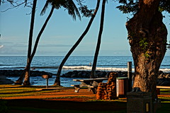 roadside park (CherbellaW) Tags: ocean trees palms hawaii picnic surf waves paddle parks maui