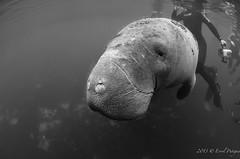 DSC_1474 (eputigna) Tags: florida breath international instructors freediving springs fl hold apnea errol submarina subaquea putigna