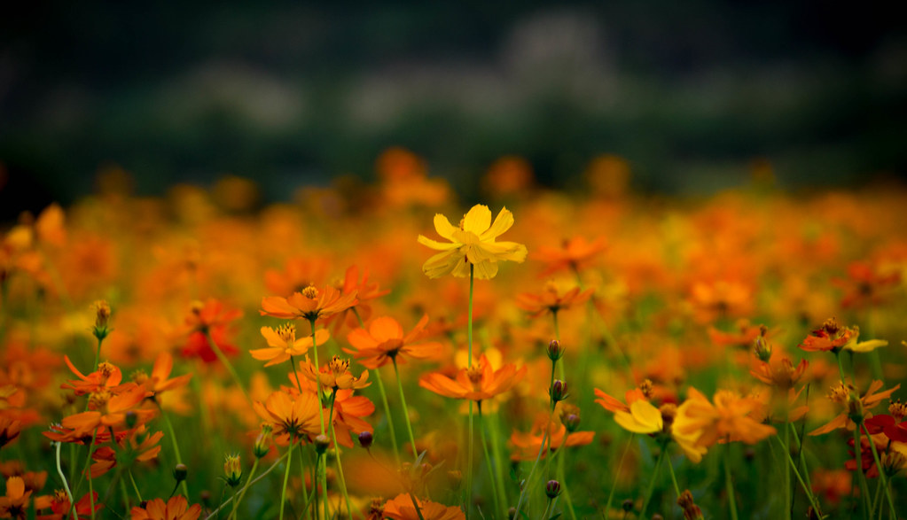 taiwanfood-06465.jpg
