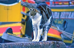'Mind That Force Field - Oh, Too Late!' (Deepgreen2009) Tags: standing cat birmingham short waking stretching forcefield hunched gasstreetbasin
