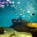 Aquarium Le 7ème continent - Crédit photo : A .Lamoureux