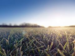 First Light - EXPLORED! Thank you :-) (Fotomondeo) Tags: morning sun sol mañana grass wales frost bokeh gales cesped lx7 pontprennau lumixlx7 panasoniclumixlx7