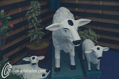 Cow Statues (fahadee) Tags: show pakistan roses cactus plants shells flower nature colors beauty rose heart coconut small collection karachi clifton 2014 fahadee