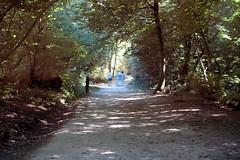 Dans les bois de la Burthe - Floirac