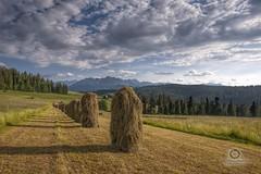 z Bukowiny... (Bartek Swistek) Tags: grass landscape outdoor plain