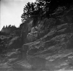 cliffs, spruce, Burnt Head, Monhegan, Bencini Koroll S, fujifilm neopan 100 acros, R3 monobath developer, 6.27.15 (steve aimone) Tags: blackandwhite film monochrome square head maine s monochromatic cliffs burnt squareformat forms fujifilm neopan 100 spruce r3 monhegan koroll acros monheganisland bencini monobath
