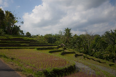 Paddy fields #..? (Bahanick (Nxt Up: Belgium)) Tags: camera original light bali art colors up look stone composition contrast dark indonesia religious temple for reflex seaside ancient asia raw foto with arte bright image good picture shapes statues buddhism saturation su bud visual hinduism emotions per curiosity colori sculptures con carvings luce forme barong denpasar sensation riflesso composizione scuro sensazioni immagine emozioni chiaro tonality visivo