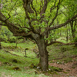 Glendalough Walk 3 thumbnail