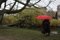 Amsterdam (vjbender) Tags: amsterdam frühling vondelpark bäume roter regenschirm wasser