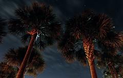 Vast (skye-skye) Tags: beach sky night stars clouds blue trees palmtree georgia tree star longexposure exposure cloud art artist young youth youthul youngster kid kids child children teen teenager teens teenagers skye skyes skyesphoto skyesphotos skyephoto skyephotos 104 tenfour ok affirmative yes create creation creative beauty beautiful