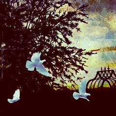 Trio (lindyginn) Tags: ginn photo magical ipad art finger painting ethereal surreal watercolor dream grunge beauty morning sunrise birds doves dark dawn light nature trees sun mobile mountains desert outdoor backyard