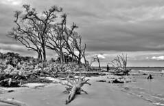 Overcast Day on Driftwood Beach (Neal3K) Tags: overcast driftwood jekyllisland georgia x100f sand palmetto spooky