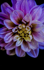 (Fotógrafa Autodidacta/Freestyle) Tags: flor naturaleza color singleflower violeta