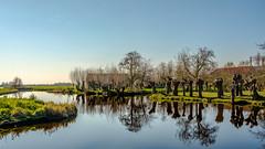 Reflections (FotoCorn) Tags: middendelfland landscape water reflection reflections knotwilgen 20reflection 52of2017 spring springtime