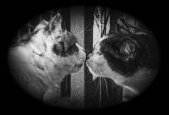 Il bacio (fabrizio_buoso) Tags: noiretblanc nikonclubit blackwhite bianconero bw biancoenero monocromo