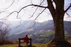 Momento de relax (joxelu.) Tags: nafarroa navarra baztan bosque basoa paisaje atardecer arboles tree roble quercus bosques f2845 zuhaitza canon