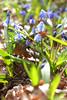 DSCF7317 (Alexander Malyshev) Tags: fuji x10 flower nature