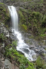 waterfall on madeira island (Francis Jimnez Meca) Tags: park wood travel mountain motion fern tree green portugal nature water fountain grass stone creek forest landscape outside flow island waterfall site moss spring movement stream branch walk sightseeing scenic fast fresh environment wilderness idyll magical rapid madeira farn moisture levada irrigation humid fizz refreshment moist undergrowth rabacal coldly
