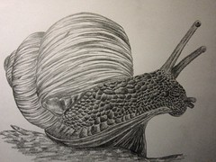 snail (waithamai) Tags: art drawing snail schnecke waithamai