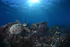 2013 05 METTRA OCEAN INDIEN 2969