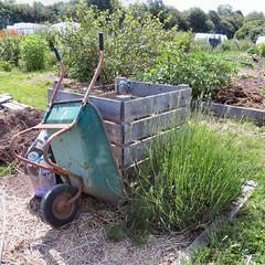 Compost Bin (Jaannn) Tags: lavender wheelbarrow communitygarden compostbin