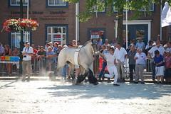 trekpaardkeuring ijzendijke 21072013 3686 (jo_koneko_san) Tags: horses horse holland netherlands cheval nederland zeeland chevaux paard hollande zeeuwsvlaanderen 2013 ijzendijke parden trekpaard zeeuwstrekpaard trekparden