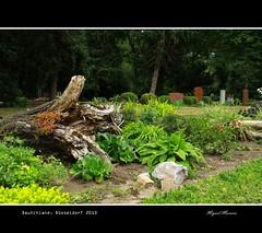 Graveyard in Dusseldorf #4 (miguel m2010) Tags: park parque friedhof graveyard germany garden deutschland jardim dusseldorf garten alemanha semitrio mygearandme