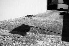 Flag Shadow (-Dandelion) Tags: shadow blackandwhite white black dark shadows flag shapes shade shape greyscale