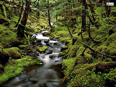 The Rainforest HD Wallpaper (Infoway LLC - Website Development Company) Tags: wallpaper beautiful wonderful nice superb awesome images exotic hd illustrator incredible breathtaking classy bambooforest mindblowing dryforest amazonrainforest greenforest winterforest woodforest junglewallpaper sunsetwallpaper islandwallpaper summerforest responsivewebsitedesign therainforesthdwallpaper subtropicalforestwallpaper waterfallintropicalforest responsivewebdesigncompany mountainsnowforest yellowredautumnforest tropicaldesertisland tropicalforestwithriver