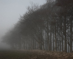 Dark December Day (Messent) Tags: pictures trees england dark poetry december ridgeway landscapedetail poetryandpicturesinternational poetryforall