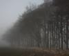 Dark December Day (Messent) Tags: pictures trees england dark poetry december ridgeway landscapedetail poetryandpicturesinternational poetryforall