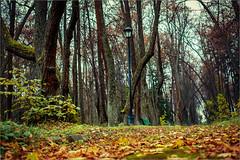 DSCF9937 (liseykina) Tags: park travel alley russia trail podmoskovie