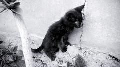 gatin (*paz) Tags: cat blackwhite bn pequeño