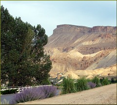 Mt Garfield, Grand Junction, CO 9-24-13a (inkknife_2000 (7 million views +)) Tags: colorado wine grapes coloradoriver peaches rockymountains agriculture mtgarfield interstate70 grandjunctionco palisadeco dgrahamphoto