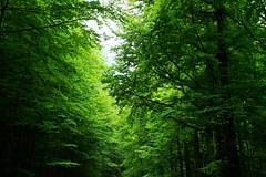 "Verde que te quiero verde. (M Roa) Tags: "" esenciadelanaturaleza nature'splus"