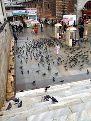 Een paar duifjes
