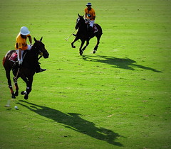 117th Hurlingham Club Open Championship, Argentina / 117 Abierto de Hurlingham YPF () Tags: vacation horse holiday latinamerica southamerica argentina argentine leather cheval nikon pony 70300mm polo rtw pferd vacanze tack hest roundtheworld paard sudamerica triplecrown  polopony amricadosul amricalatina globetrotter southernhemisphere zonasul amriquelatine polomatch  poloclub argentinien 16days  hurlingham equidae onhorseback amricadelsur sdamerika zonea hurlinghamclub worldtraveler  ariannin  repblicaargentina littleeurope laaguada  americadelsud chukkas argentinerepublic  argentinidad pologame poloteam ladolfina   d700 zonaa nikond700 chukkers abiertodehurlingham  triplecorona 117thhurlinghamopen hurlinghamopen  chukers tradiciondelpoloargentino