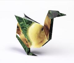 Origami création - Didier Boursin - Canard