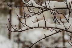 First snowfall this year (Maryus B.) Tags: winter snow cold tree nikon cloudy freeze romania zapada ilfov popestileordeni nikond5100