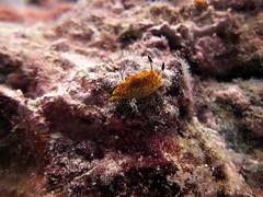 IMG_9078 (milewski) Tags: ocean water underwater salt scuba diving scubadiving saltwater underwaterphotography oceanphotography