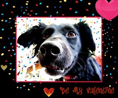 Be My Valentine (janetfo747 ~ Thank You for the Views and Comments) Tags: dog puppy hearts valentine 1001nights picnik zsa passionphotography abigfave anawesomeshot theunforgettablepictures theperfectphotograph goldstaraward flickrestrellas rubyphotographer bestofthbest artofatmosphere atmospherephotographer {vision}:{car}=0611 {vision}:{outdoor}=0669
