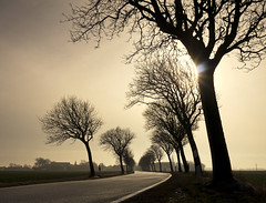 Hazy Perspective (parkerbernd) Tags: road autumn trees winter light sun field backlight germany lumix fantastic village angle low perspective foggy silhouettes panasonic explore hazy leafless fehmarn acre schleswigholstein orth gx1 sulsdorf