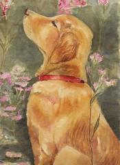Smell the roses (GREY PEPPER ART) Tags: art dogs animals gardens golden puppies labrador retriever watercolours