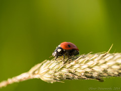P5310817-1_1600px (Oliver Deisenroth) Tags: nature animal insect