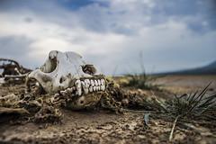 Abandono (Susie Palermo G) Tags: desolacin laguna seca sayula