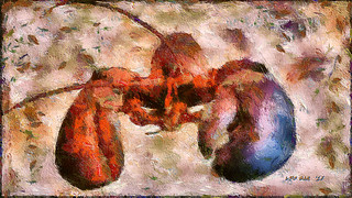 Homard Fatal - Deadly Lobstah