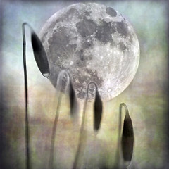 moonage daydream (1crzqbn) Tags: sliderssunday moon moss macro 1crzqbn