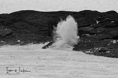 Flatrock IceSurf-17-3 (Ian L Winter) Tags: flatrock nature newfoundland driftice surf newfoundlandandlabrador canada ca