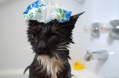 Well... I'm NEVER gonna get myself stuck between the walls again!!! ( True Fact :) (Captions by Nica... (Fieger Photography)) Tags: cat bath showercap cap bathcap shower feline moment portrait eyes wet water bathroom indoor quebec canada toby animal pet